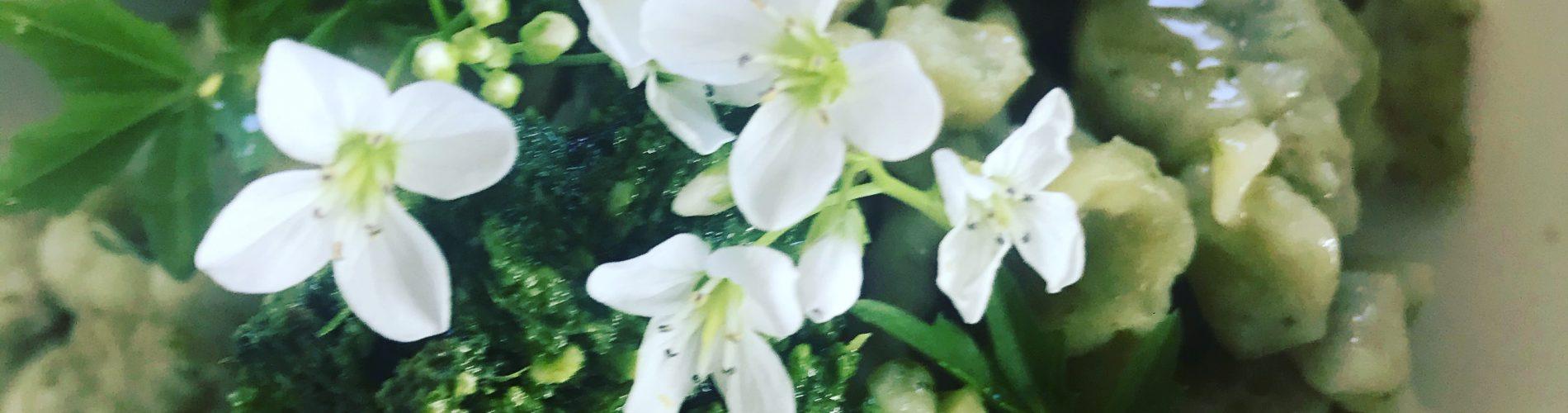 wild garlic and nettle nockerl